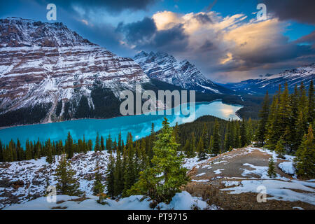 Peyto Lake is a glacier-fed lake in Banff National Park in the Canadian Rockies. The lake itself is easily accessed from the Icefields Parkway. - Stock Photo