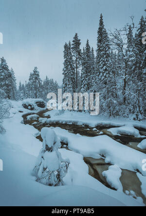 Fresh Snow cover on boreal forest near Heia, Grong area, northern Norway. Fantastic winter time. - Stock Photo
