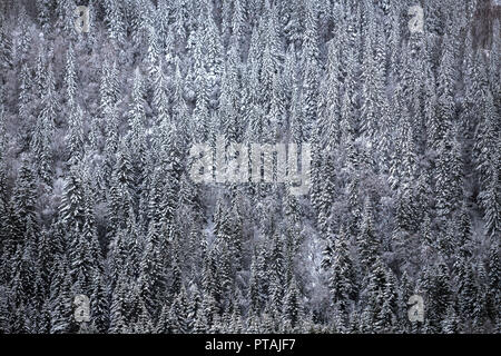 Winter forest covered by snow. Wintertime in Norway. - Stock Photo