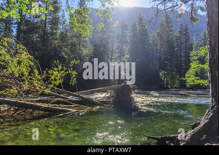 The Merced river on a sunny summer's afternoon, flowing through Yosemite Valley. Yosemite National Park, California. - Stock Photo