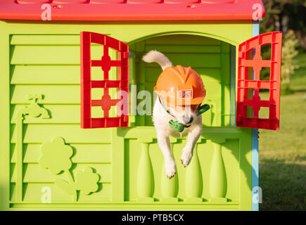 Dog with hammer and hardhat as funny repairman in hurry to help - Stock Photo