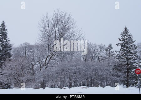 Fresh snow covers the trees, Commissioners Park, Ottawa, Ontario, Canada. A stop sign is visible lower right corner. - Stock Photo