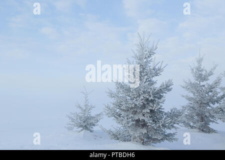 Snow covered coniferous trees in the winter landscape. - Stock Photo