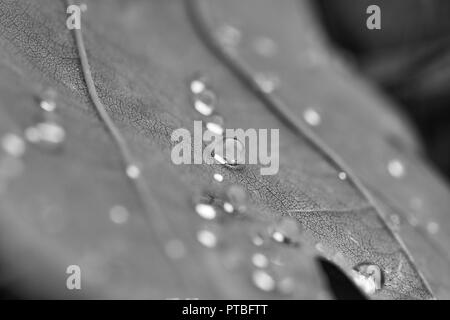 water drops on a leaf macro - Stock Photo