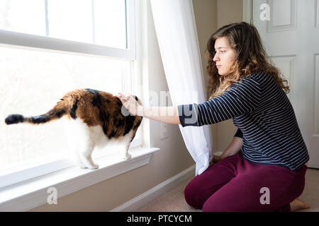 One cute, female calico cat closeup standing on windowsill window sill, looking staring near curtains, blinds outside in room with young woman, female - Stock Photo