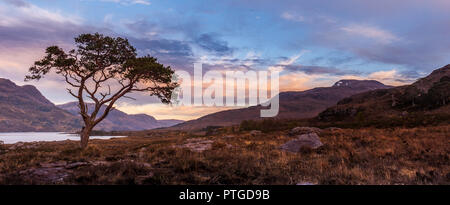 A lone scots pine standing on the banks of Loch Maree in Wester Ross in the Scottish Highlands The loch is the fourth largest freshwater loch in Scotl - Stock Photo
