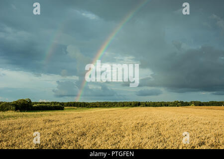 Large field, the trees on the horizon, rainbow and dark clouds in the sky - Stock Photo