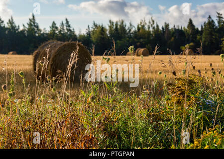Hay bales out on a farm in rural North America. - Stock Photo