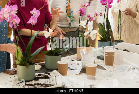 Active seniors enjoying flower arranging class - Stock Photo