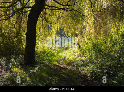 Path in shadow in woodland looking out to bright Autumn sun in Autumn in West Sussex, England, UK. - Stock Photo