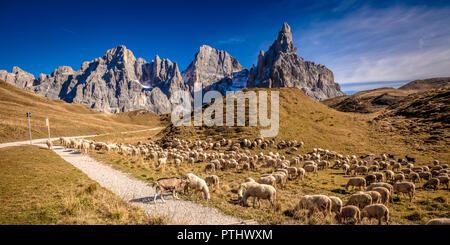 flock of sheep in passo rolle, italian alps - Stock Photo