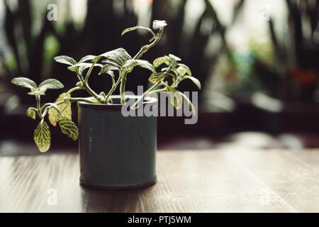 Green Pot with plant on wooden table backlit in dark room - Stock Photo