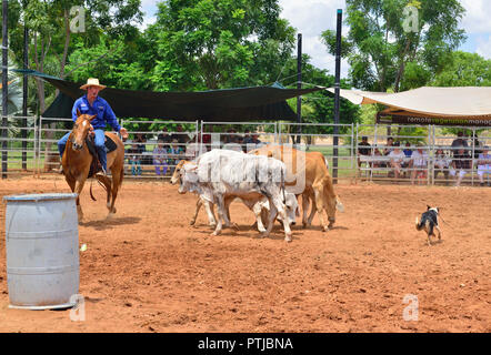 Tom Curtain the singing cowboy performing rounding up Steer in his Outback Experience show in Katherine, Northern Territory, Australia - Stock Photo