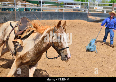 Tom Curtain the singing cowboy performing in his Outback Experience show in Katherine,Northern Territory, schooling  a young unridden wild horse. - Stock Photo