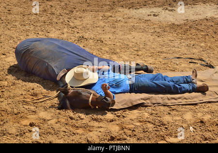 Tom Curtain the singing cowboy 's assistant stockman ,with trained horse  performing in his Outback Experience show in Katherine, Northern Territory, - Stock Photo