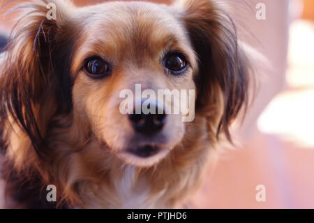 Cute playful dog portrait with out of focus background - Stock Photo