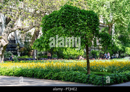 Whitehall Gardens, London, UK - Stock Photo