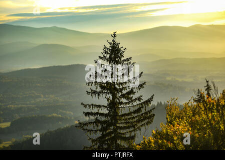 A large pine against the backdrop of the Karkonosze mountains in Poland, a mountain landscape. - Stock Photo