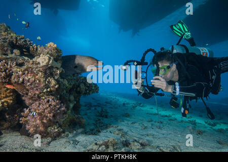 Female scuba diver  and video photographer approaches moray eel in coral reef under dive boats. Red Sea, Egypt, September, 2018 - Stock Photo