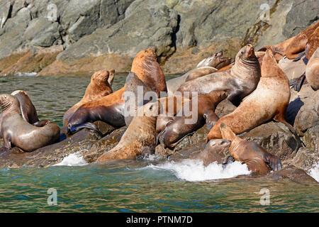 Stellar Sea Lions Crowding on a Rock in Prince William Sound near Valdez, Alaska - Stock Photo
