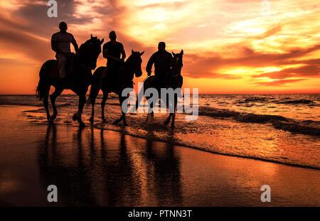 A Silhouette photo of Horsemen riding horses on the beach, Gaza - Palestine - Stock Photo