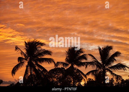 Sunsetting with golden glow silhouetting coconut palm trees in the northeast of Brazil - Stock Photo