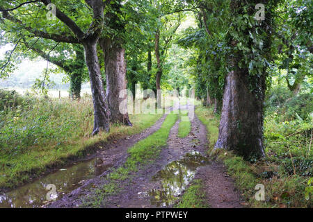 A wet farm track in summer, Cornwall, UK - John Gollop - Stock Photo