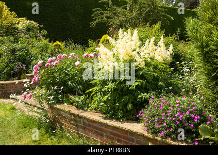 Mixed herbaceous border in early summer in an English garden featuring Aruncus, hardy geraniums and peonies - Stock Photo