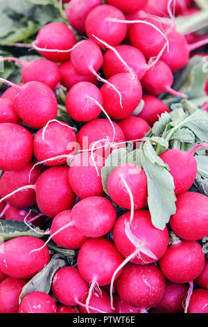 One of (9) images relating to various vegetables for sale on stalls in Munich's Market. Viewed here are radishes/Radieschen. - Stock Photo