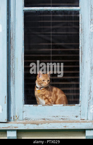 Adorable young ginger red tabby cat sitting in a paint pealing window of an old house. - Stock Photo