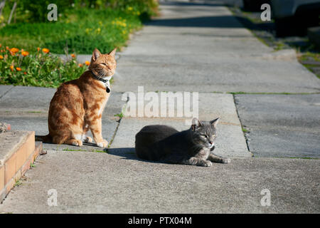 Two cats, one grey one, ginger red, friends sitting together on a footpath looking in the same direction.