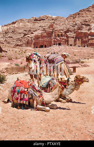 A small group of camels waits for a ride on the main path in the scenic destination of Petra in Jordan. - Stock Photo