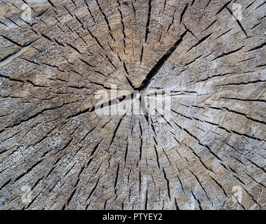 Texture of a tree with cracks, close-up