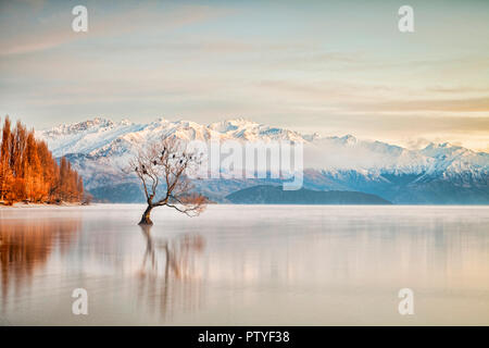 Winter at Lake Wanaka, Otago, New Zealand, with birds roosting in the single tree and mist rising from the water.