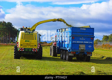 Gathering cut hay ready for the silage pit and will be used as Winter feed for the cattle herd near Inverness, in the Scottish Highlands UK. - Stock Photo
