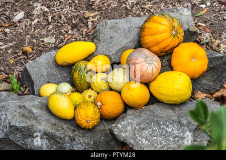 Various pumpkins as a decoration on a stone - Stock Photo