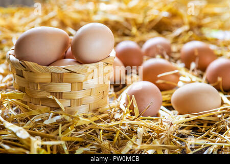 Fresh and organic eggs in basket on straw in nest at farm - Stock Photo