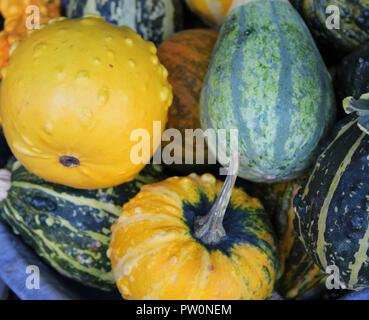 Small pumpkins in the basket - Stock Photo