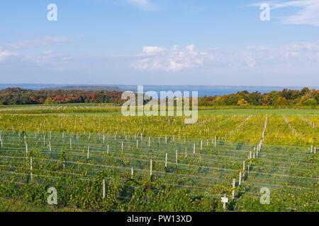 Vineyards on Old Mission Peninsula, Traverse City, Michigan. - Stock Photo