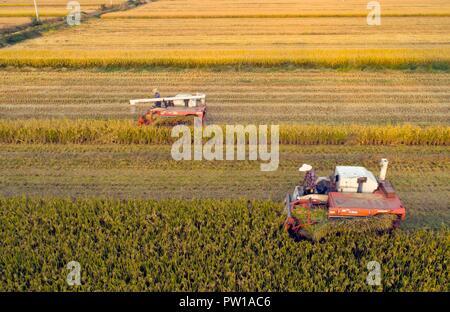 Huaian. 11th Oct, 2018. Aerial photo taken on Oct. 11, 2018 shows farmers driving reapers to harvest rice in Xindu Township of Huaian City, east China's Jiangsu Province. Credit: He Jinghua/Xinhua/Alamy Live News - Stock Photo