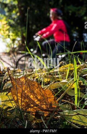 12 October 2018, North Rhine-Westphalia, Herdecke: A cyclist driving past a fallen leaf that glows in the autumn sun. Photo: Bernd Thissen/dpa - Stock Photo