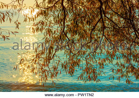 Willow tree and sunlight on shore of Lake Ontario at Lynde Shores Conservation Area in Whitby Ontario Canada - Stock Photo