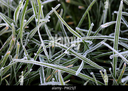 Close up of Frost on grass blade in winter morning - Stock Photo