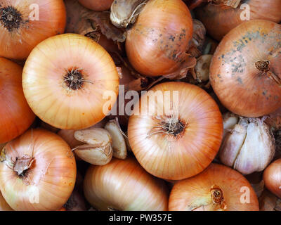 Freshly picked onions and garlic. Top view. - Stock Photo