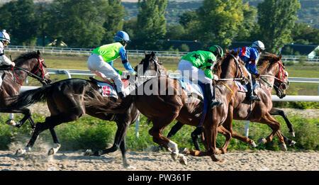 horse racing in Pyatigorsk. - Stock Photo