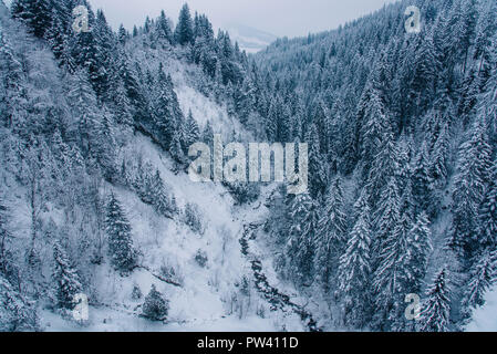 View of snow covered pine forest in Switzerland.