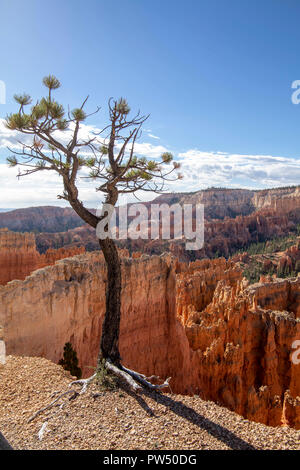 Bryce Canyon in Utah - Stock Photo
