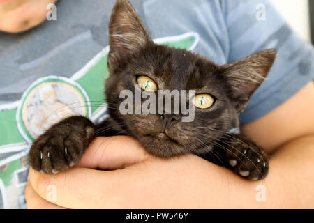 hand of young boy holding little black cat, portrait of  cat with yellow eyes wide open - Stock Photo