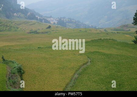 Amazing fields of rice in northern China  - photographed by Dan Yeger - Stock Photo