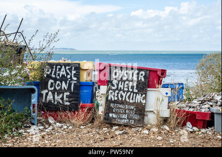 Whitstable beach, Kent, UK - August 25, 2012: Oyster Shell recycling baskets where oyster shells are piled up as an effort to re-establish oyster beds - Stock Photo